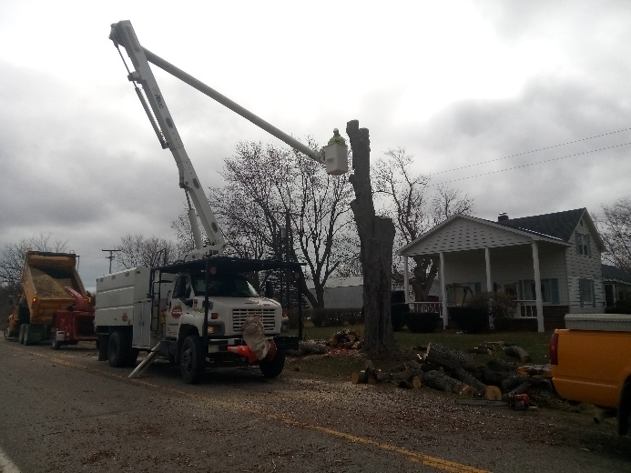 Complete Tree Removal